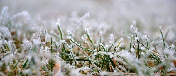 cuidados cesped artificial invierno